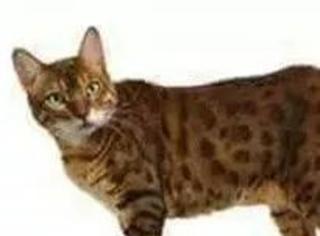 当你要摸猫的时候,猫的反应,哈哈,谁P的太有才了...