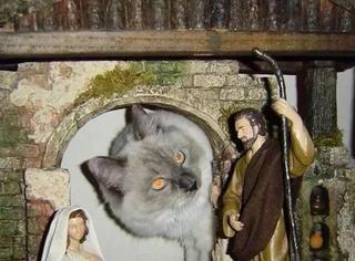 天不怕地不怕的猫主子,这次想当耶稣了!