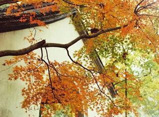 任性规定15条街不扫落叶,只为你保留一方秋色。