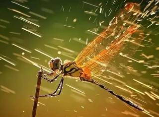 野生动物摄影居然是摆拍的??生态摄影的真相原来是……