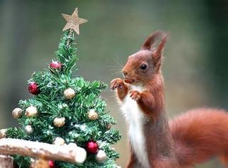圣诞将至,全球各地花式迎接