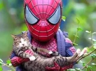 主人买了个蜘蛛侠手办,利用PS技术跟猫合照,没想到……