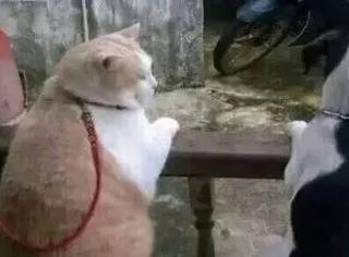 谁能想到日本网站上,连猫片都带着吐槽