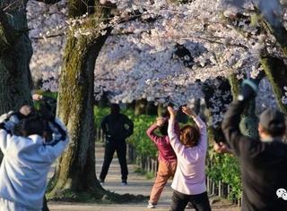 日本哪里人最长寿?长寿的秘密竟是这个!