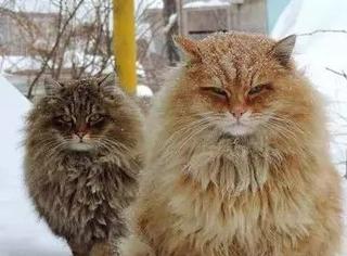 推主有个农场常遭鼠患,于是养了些猫,就这气场老鼠都得吓死
