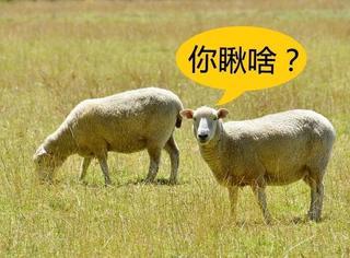 为啥有的动物眼睛长在前面,有的长在两边?