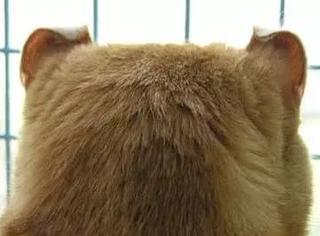 虽然猫平时高冷,霸气,威严, 只要一看到它的后脑勺……