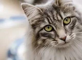 为什么有些猫会跟陌生人回家?原来...