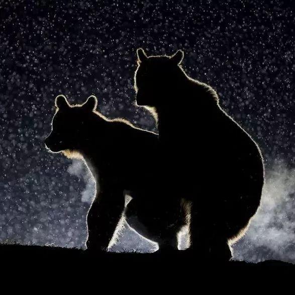 2017年的14个最有趣的野生动物照片已经出炉