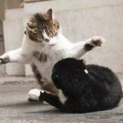 在法国政府的带领下,一场猫鼠大战开始了