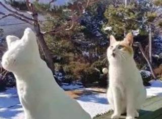主人做了一个雪猫在放在门口,被猫看到后,竟然...