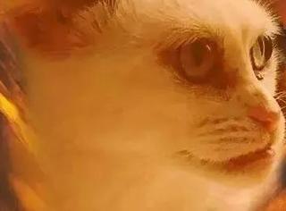 我就问你,这只猫你敢吸吗?
