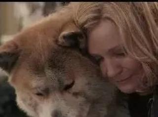 """真实版忠犬""""八公""""的故事:从差点被抛弃到挽救两条人命"""