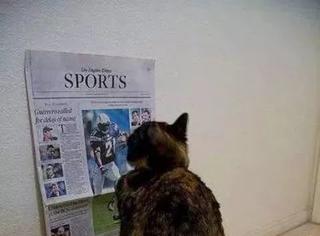 国外一些主人爱猫,怕它们上厕所无聊,于是...