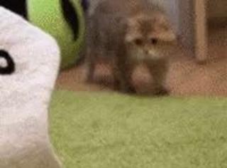 主人给猫买了个鱼猫窝,猫有点怕...
