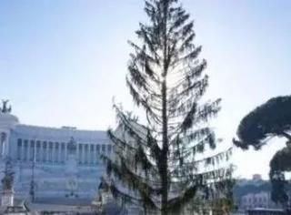 他们今年斥资5万欧元买了一棵最丑圣诞树。。。