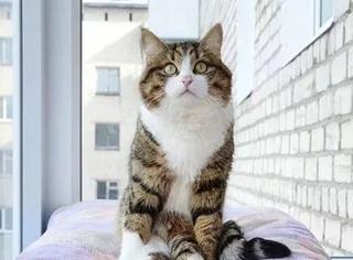 这猫两条后腿不能动,但每天都很快乐,让人看了都开心