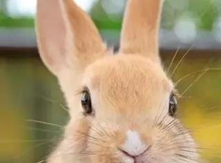 可爱就是正义!!日本软萌小动物咖啡店严选推荐