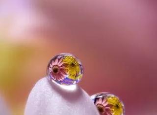 作品欣赏:精美绝伦的微距水滴