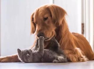 猫狗到底谁更聪明?