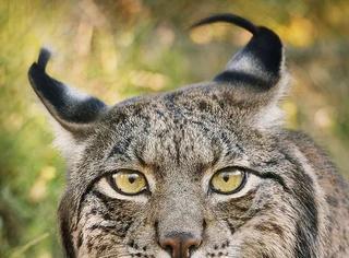 摄影师花两年拍摄的濒危动物,可能再也看不到了!