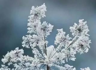 难得一见的雪中花,美到心醉!