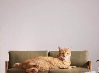 没错,你的生活可能还不如一只猫!