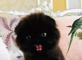 主人表示家里的黑猫超凶的,让人看了就好怕,真的好怕怕哈哈
