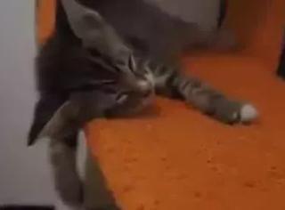 猫可以睡死到什么程度?
