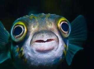 鱼能感受到痛苦吗?
