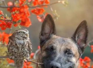 当狗子和猫头鹰成为朋友~这画面真是太有爱啦!