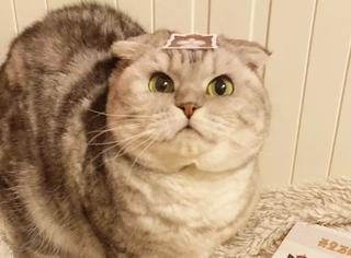 猫身上那么多萌点,你最喜欢哪个?
