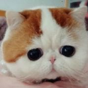 大爱猫咪控