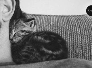 你真的懂你的猫吗?| 科学说,猫是这样和你说话的