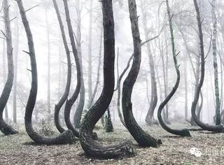 树扭曲成这样让人想到树妖