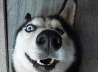 如何霸气回复12月刷屏狗们