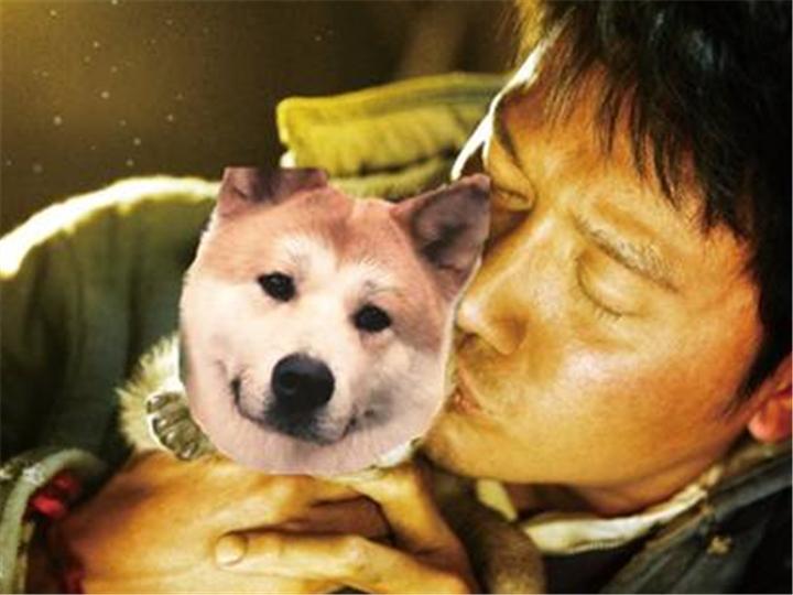 如果让忠犬八公去演《狼图腾》 那结局一定会哭死人....