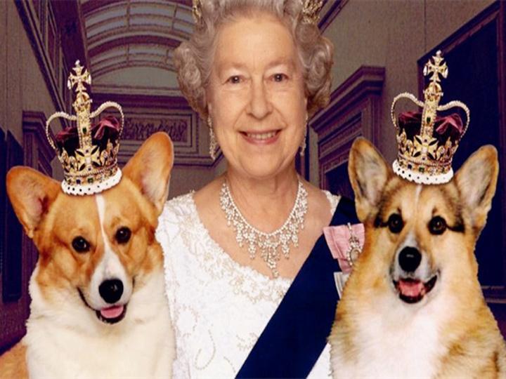 她是女王 她养了80年的柯基 今天她说不会再养了