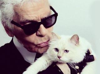 这只猫 一年赚300万 有仆人有司机 只因为它跟对了人