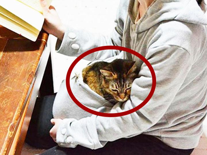 日本又为全世界的猫奴贡献了一件衣服